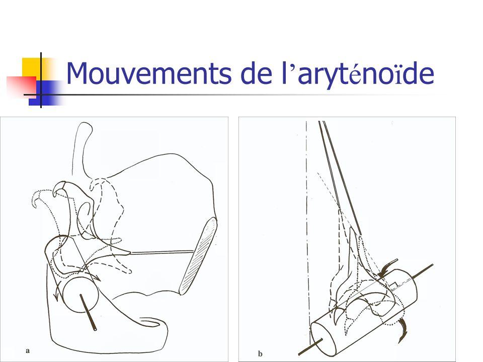 Mouvements de l'aryténoïde