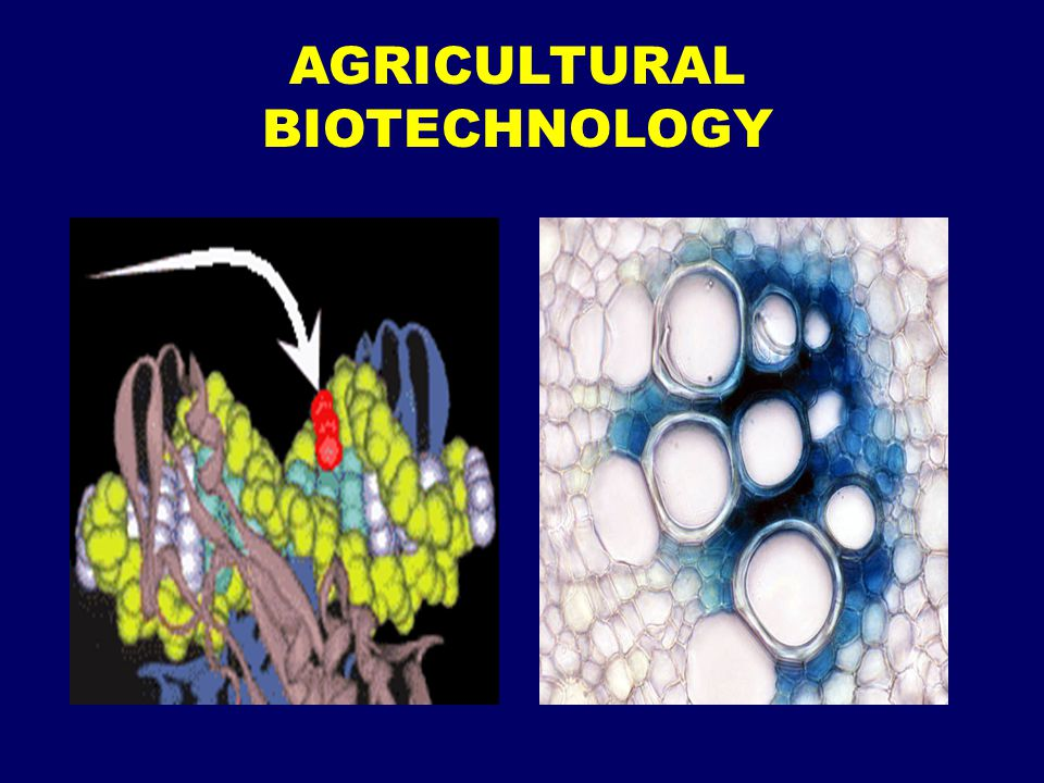 class differences and the issue of biotechnology Biotechnology in the patterns of technological development and globalization over the past two centuries to examine the similarities and differences of the.