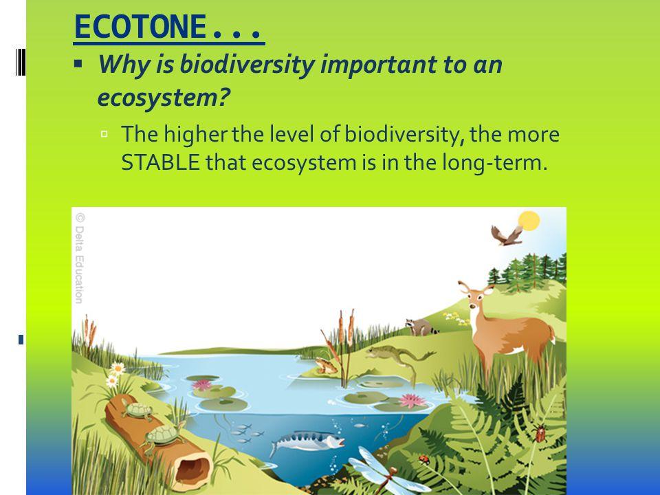 Ecosystem homework help