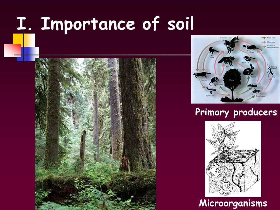 Soils i importance of soil ii soil structure a for Importance of soil minerals