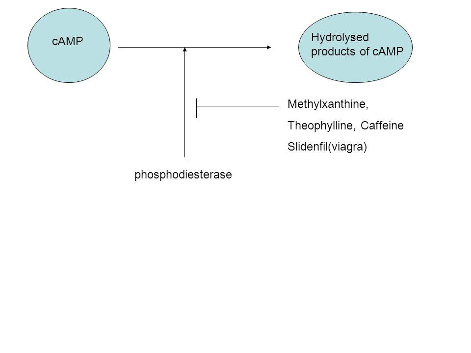 Mechanism behind viagra