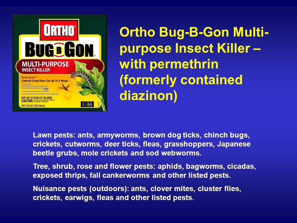 The ortho group bugbgon