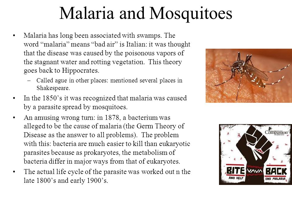 Malaria and Mosquitoes