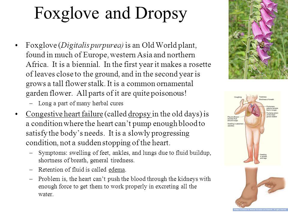 Foxglove and Dropsy