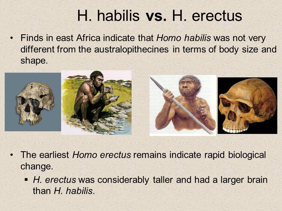 Human Evolution. - ppt download