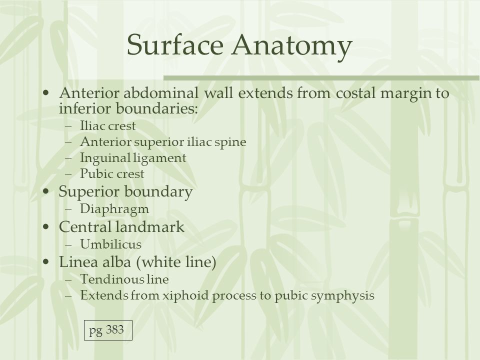 Surface Anatomy, Vessels, Muscles, and Peritoneum - ppt ...