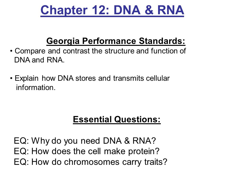 dna and rna worksheet answers Termolak – Dna and Rna Worksheet