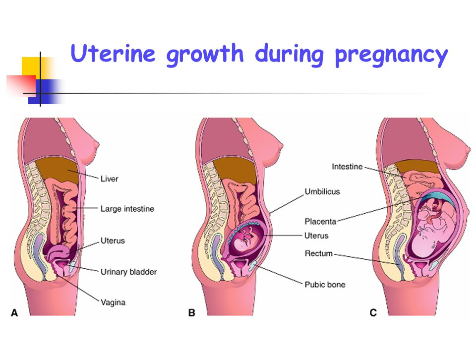 during pregnancy uterine decidua synthesises Human uterine leukocytes and pregnancy authors a abstract: in human pregnancy, the embryo implants into the specialized mucosal wall of the uterus (decidua) which are found in the decidua in large numbers during early pregnancy these uterine nk cells have been shown to express.