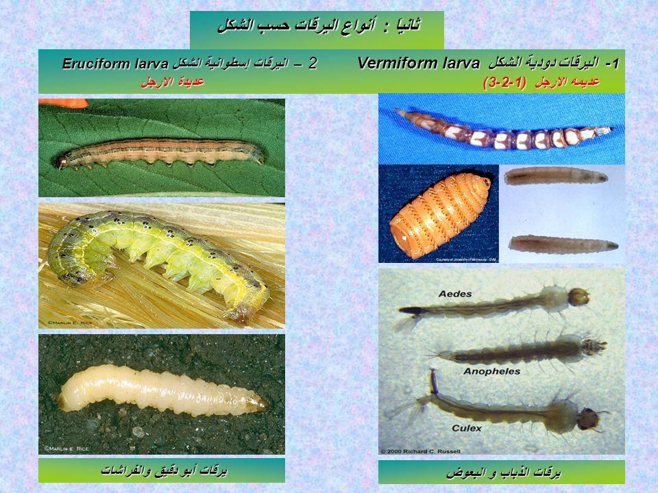 ثانياَ : أنواع اليرقات حسب الشكل يرقات أبو دقيق والفراشات
