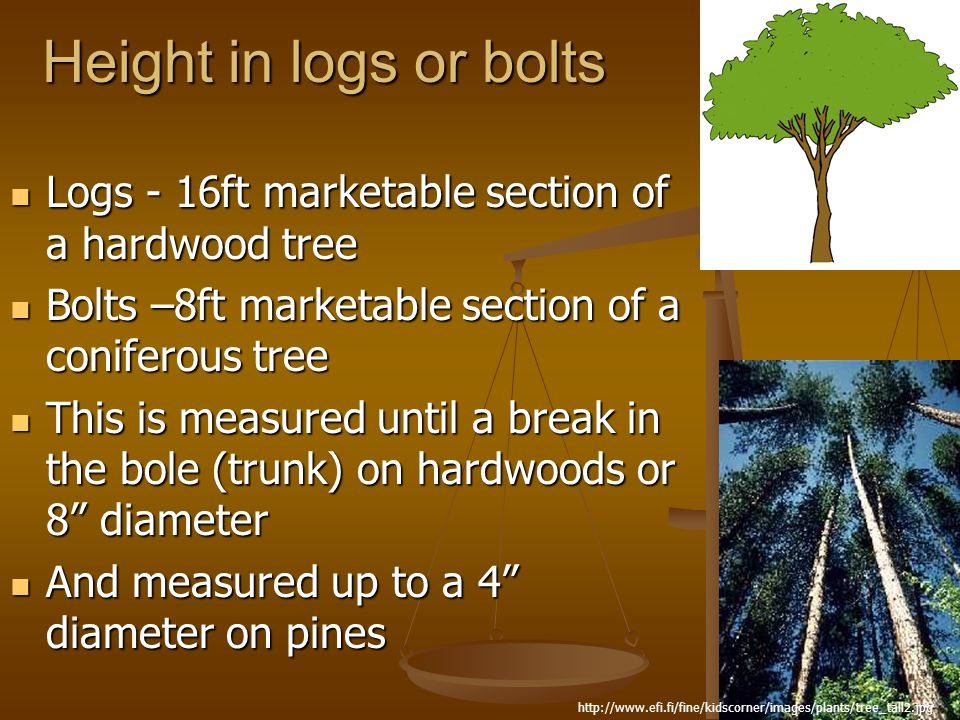 Height in logs or bolts Logs - 16ft marketable section of a hardwood tree. Bolts –8ft marketable section of a coniferous tree.