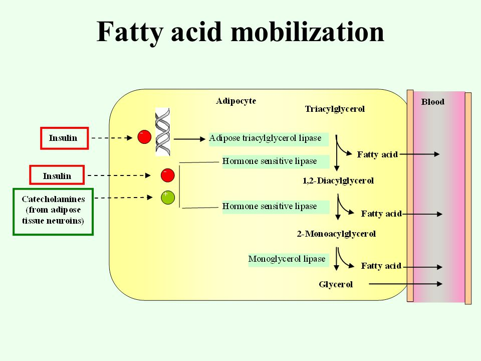 propionate fatty acid