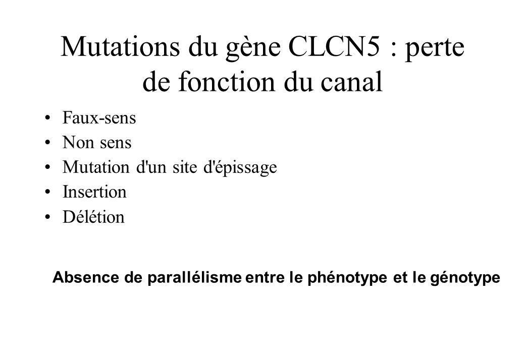 Mutations du gène CLCN5 : perte de fonction du canal