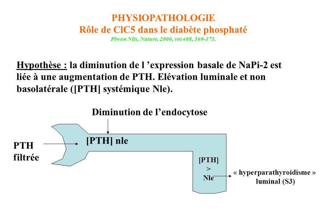 Rôle de ClC5 dans le diabète phosphaté « hyperparathyroidisme »