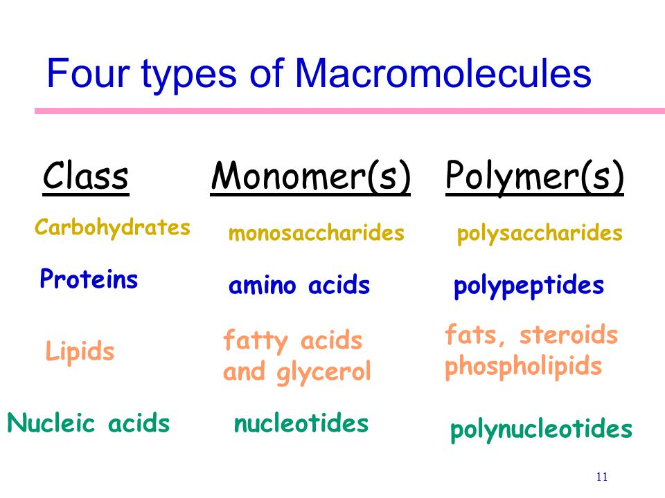 carbohydrates proteins lipids and nucleic acid Overview carbohydrates, lipids, proteins, and nucleic acids are organic molecules found in every living organism these macromolecules are large carbon based structures.