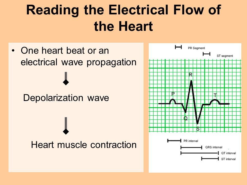 Reading the Electrical Flow of the Heart
