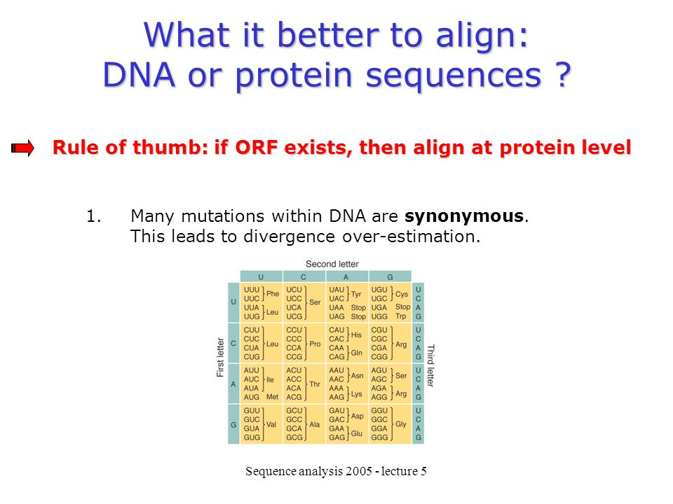 What it better to align: DNA or protein sequences