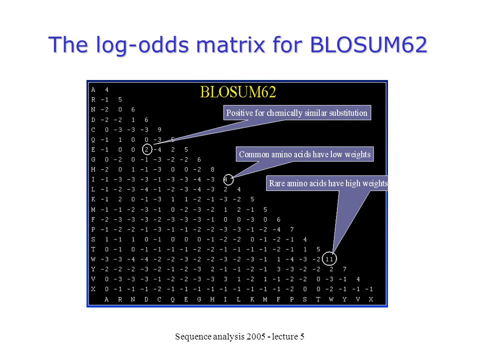 The log-odds matrix for BLOSUM62