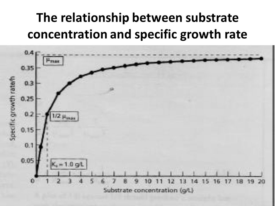 enzyme specificity in relationship to substrate
