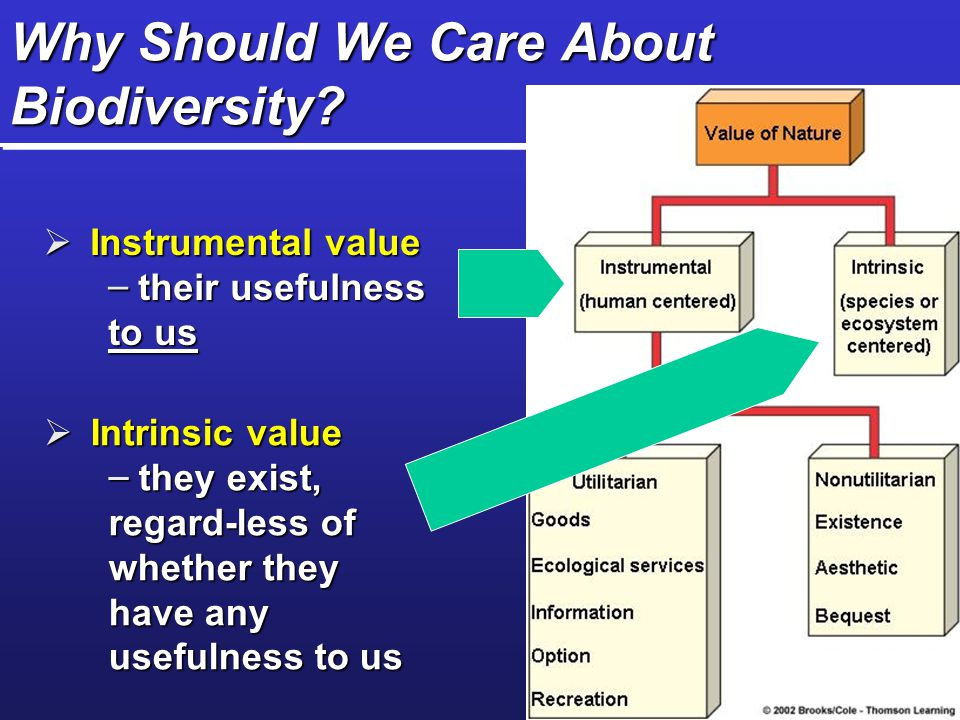 "intrinsic values of biodiversity In the same way that we need not reframe the discussion about equality of all humans because not all slavery in the world has ended, we need not necessarily reframe our concept of intrinsic value in nature because we have yet to accomplish a comprehensive conservation of biodiversity if we wish to ""rethink values and."