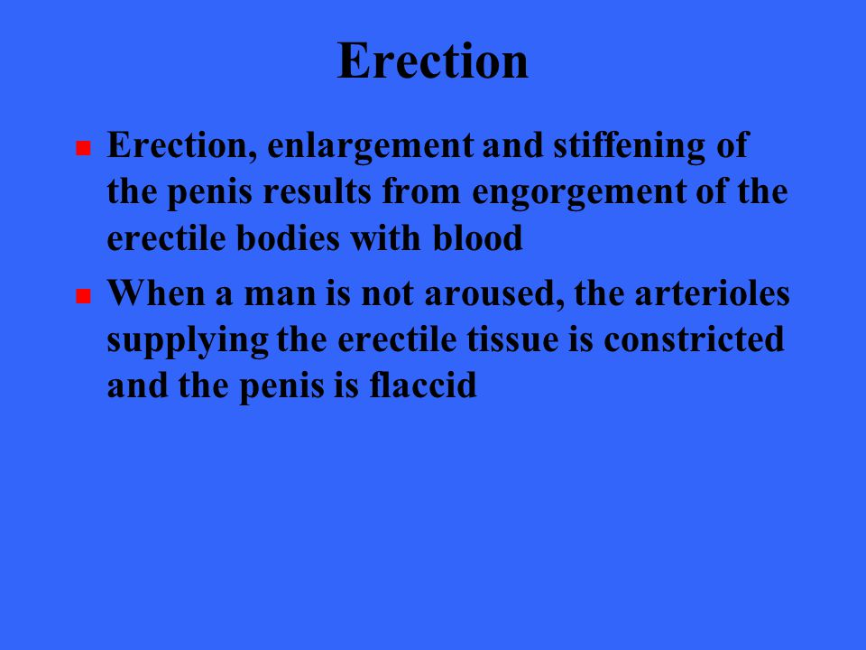 Erection Of The Penis Results From 93