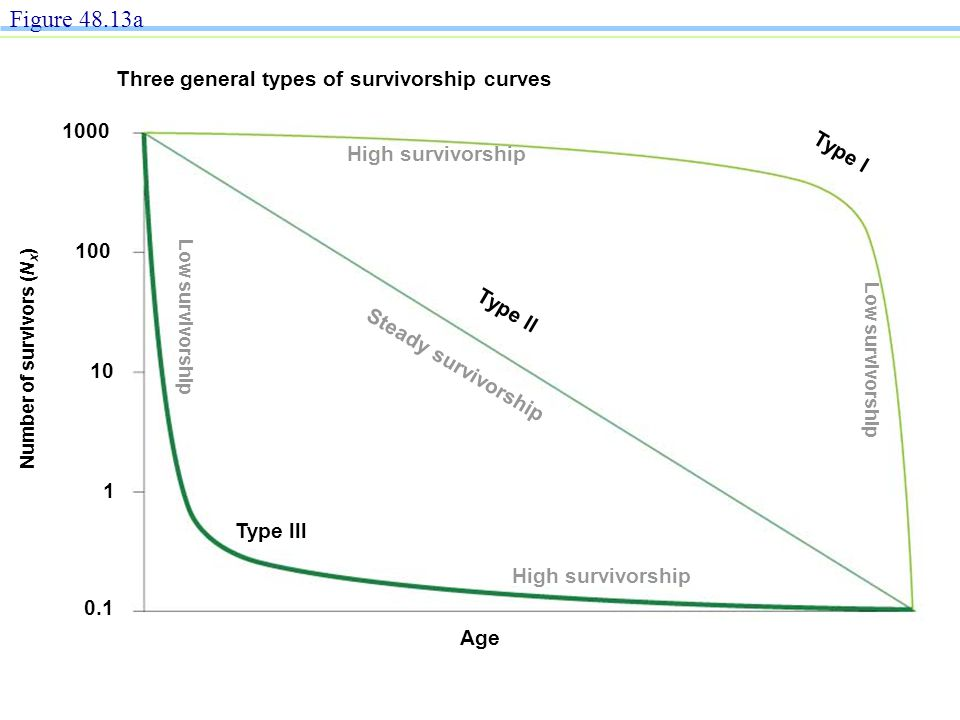 Population growth exponential growth ppt download figure 4813a three general types of survivorship curves 1000 type l ccuart Image collections