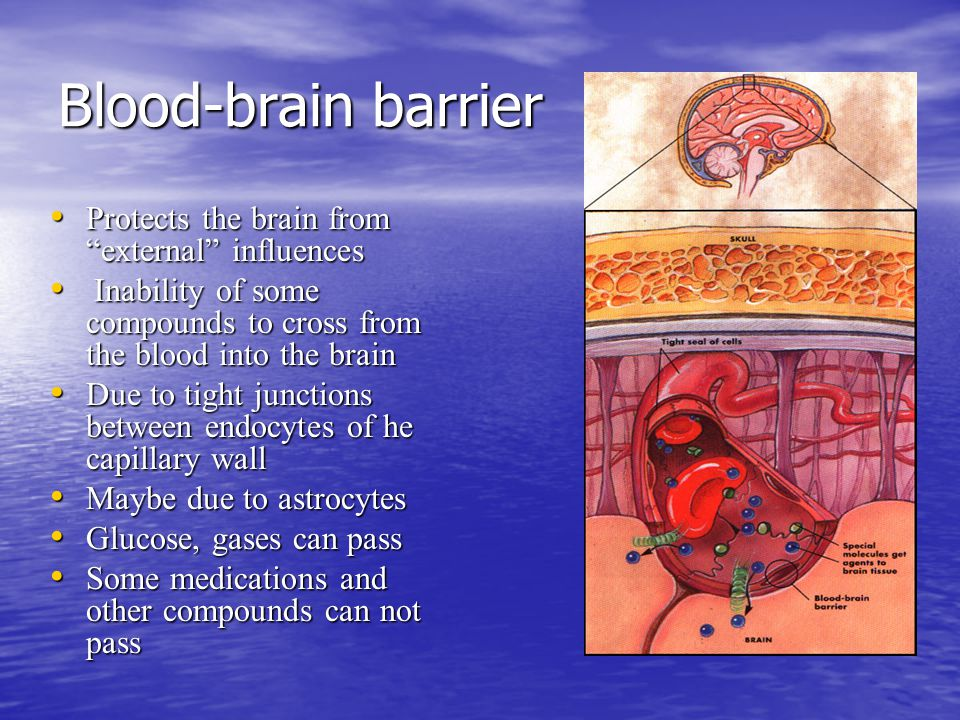 Blood-brain barrier Protects the brain from external influences