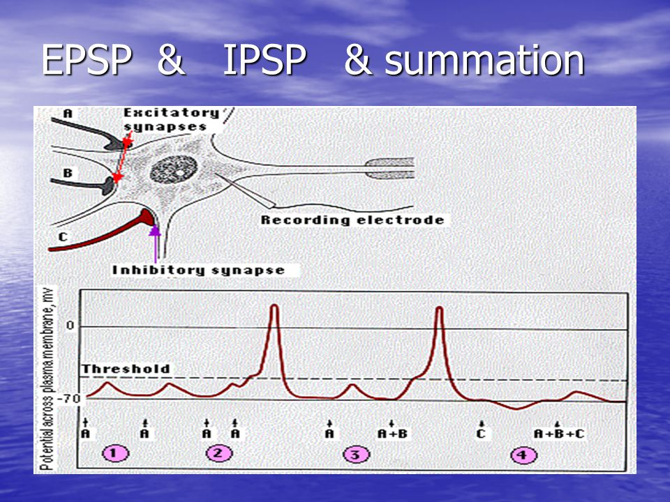 EPSP & IPSP & summation