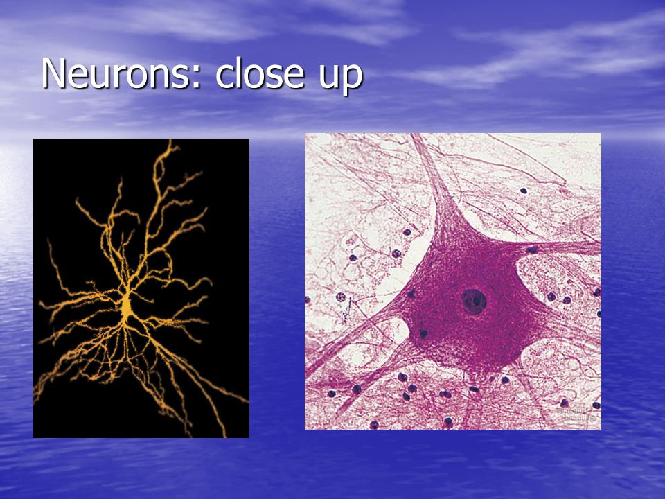 Neurons: close up
