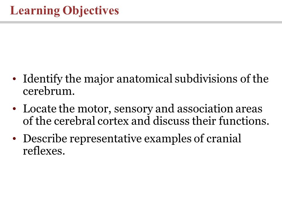 Lecture 10: Chapter 14 The Brain And Cranial Nerves Pages