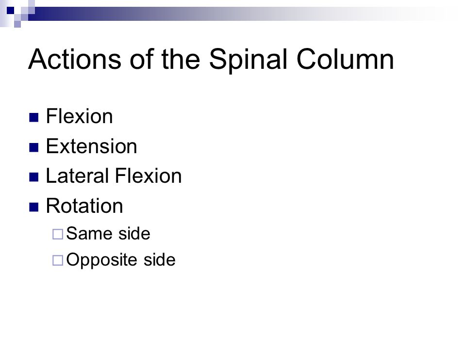 Actions of the Spinal Column