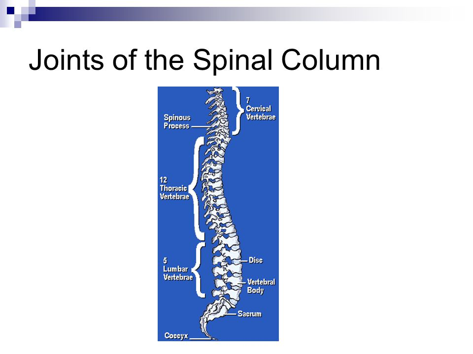Joints of the Spinal Column