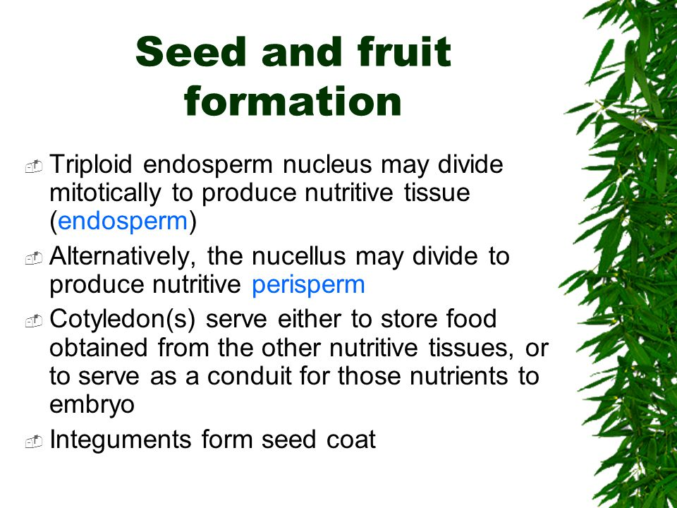 endosperm formation Here, we report additional functions for abs and shp1/shp2 in ovule  development, integument formation, endosperm development, and seed.