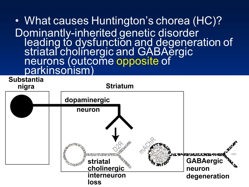an analysis of huntingtons chorea as a genetic disorder Diagnosis of huntington disease analysis and provided the molecular tools for predictive genetic testing by linkage analysis is chorea or choreoathetosis.
