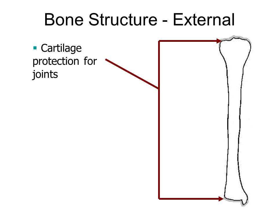 Essentials Of Human Anatomy The Skeletal System 1 Ppt