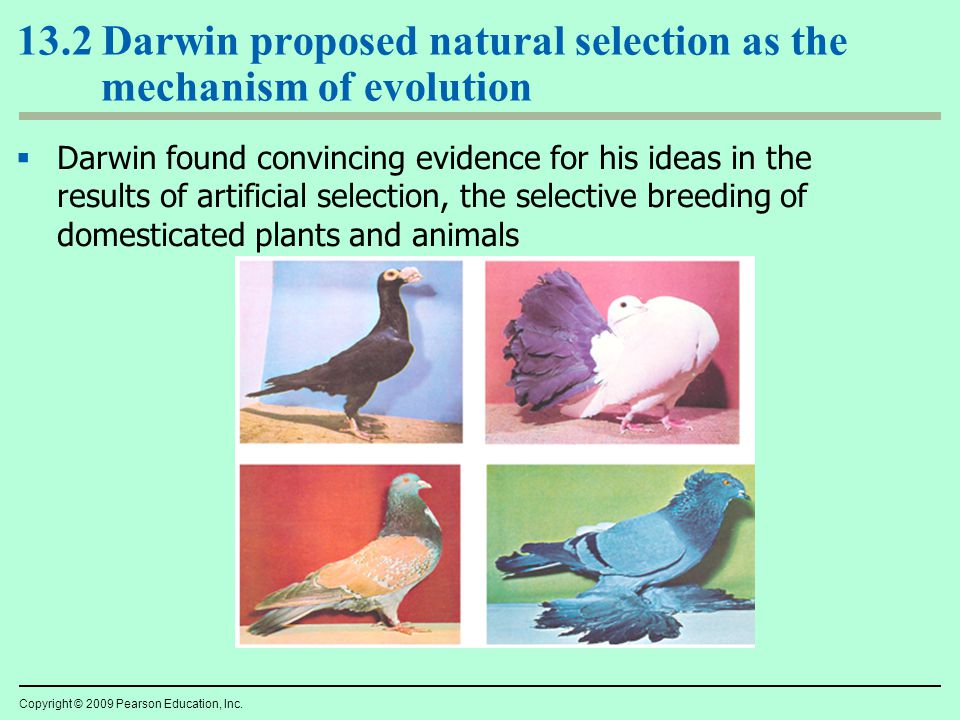 Can Natural Selection Act On Clusters