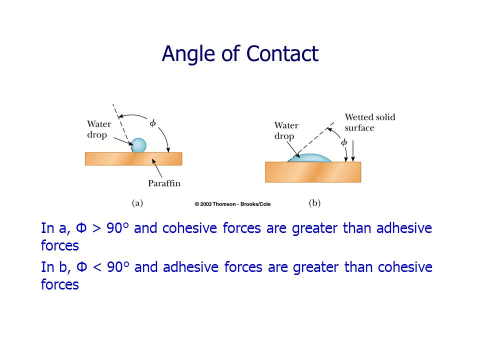 Angle of Contact In a, Φ > 90° and cohesive forces are greater than adhesive forces.