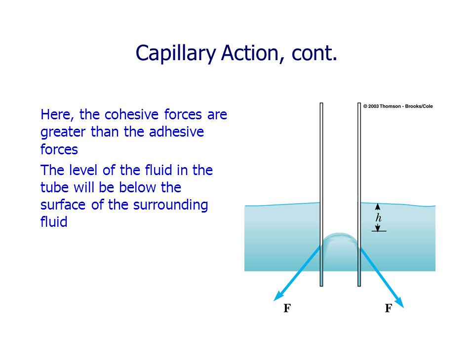 Capillary Action, cont. Here, the cohesive forces are greater than the adhesive forces.