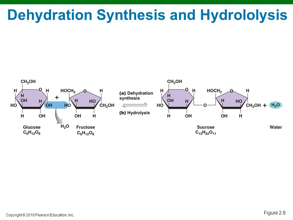 Dehydration Synthesis Example Chapter 2 Chemical Pri...