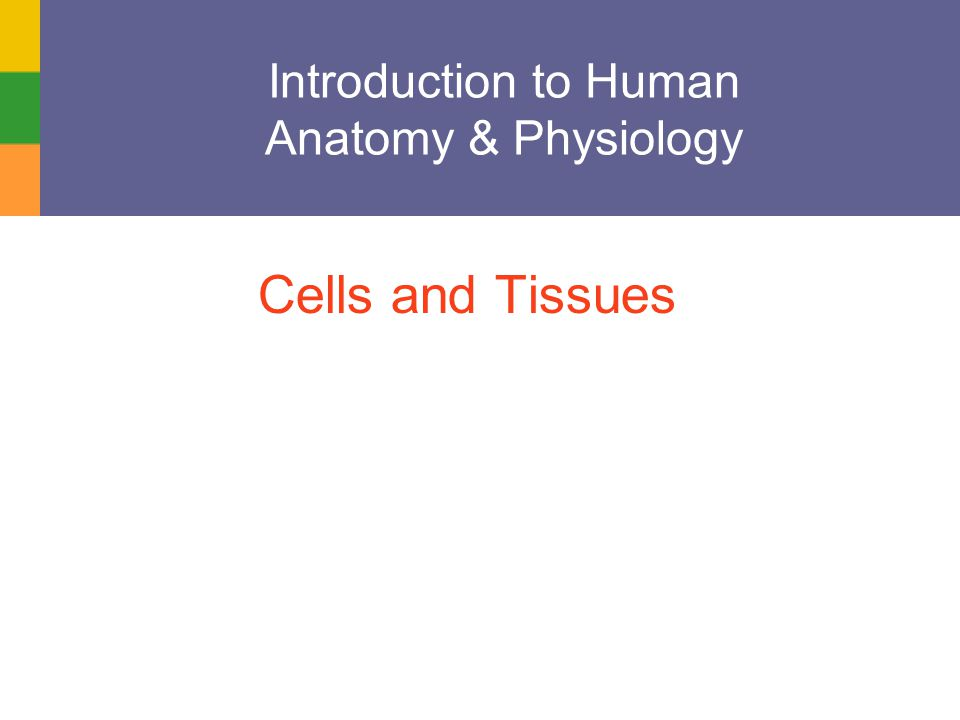 Ziemlich Introduction To Anatomy And Physiology Ppt Bilder ...