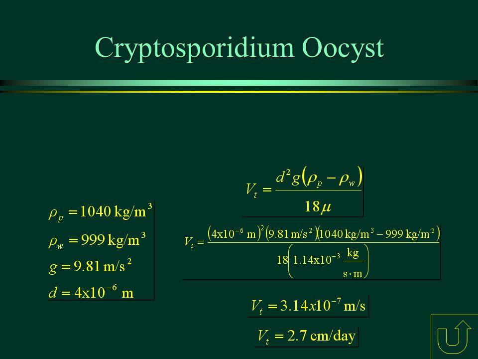 Cryptosporidium Oocyst