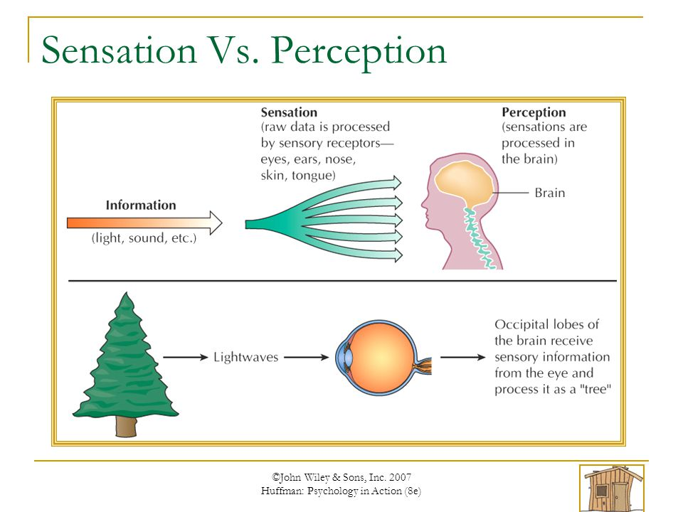 sensation perception Try our free ap psychology sensation & perception practice test features multiple choice quiz questions that are great for your ap psych review.