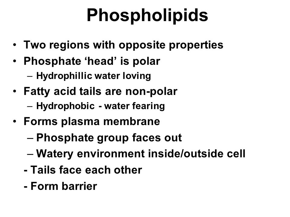 Phospholipids Two regions with opposite properties