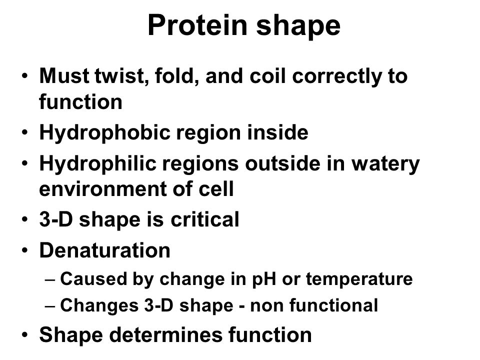 Protein shape Must twist, fold, and coil correctly to function