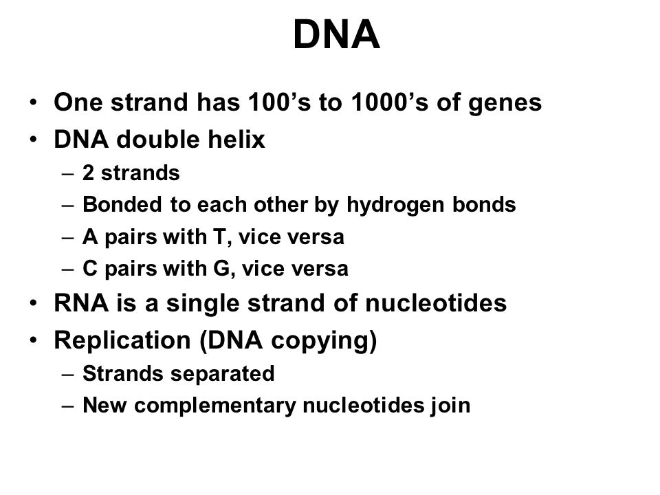 DNA One strand has 100's to 1000's of genes DNA double helix