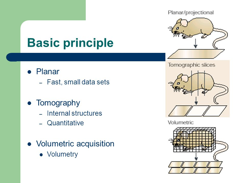 the basic principle of the animal Philosophy notes: singer, all animals are equal (ie basic principle of equality) that we extend to (typical, sentient) human beings therefore, we ought to extend to animals the same equality of consideration that we extend to human beings.