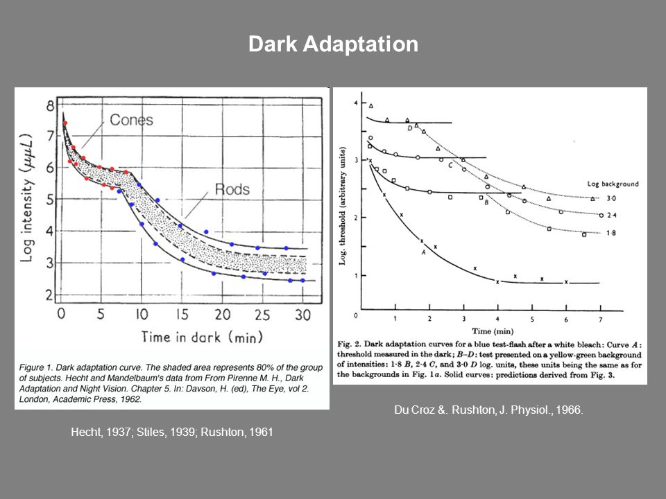 Dark Adaptation Du Croz &. Rushton, J. Physiol., 1966.