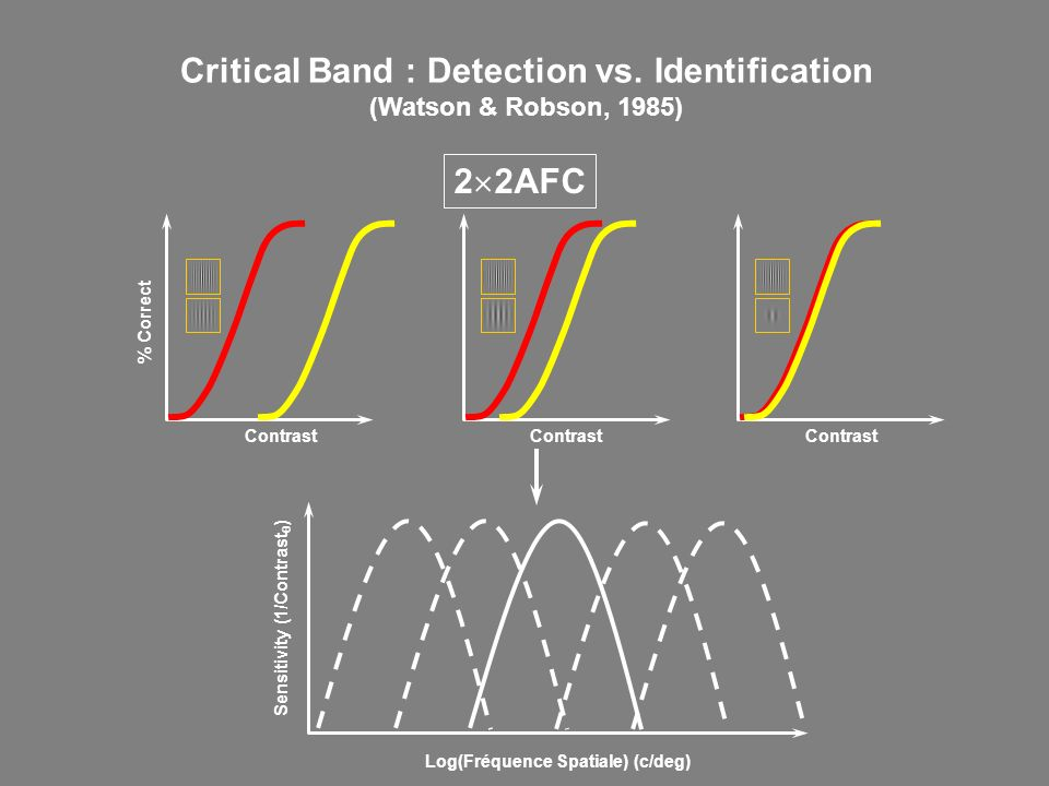 Critical Band : Detection vs. Identification