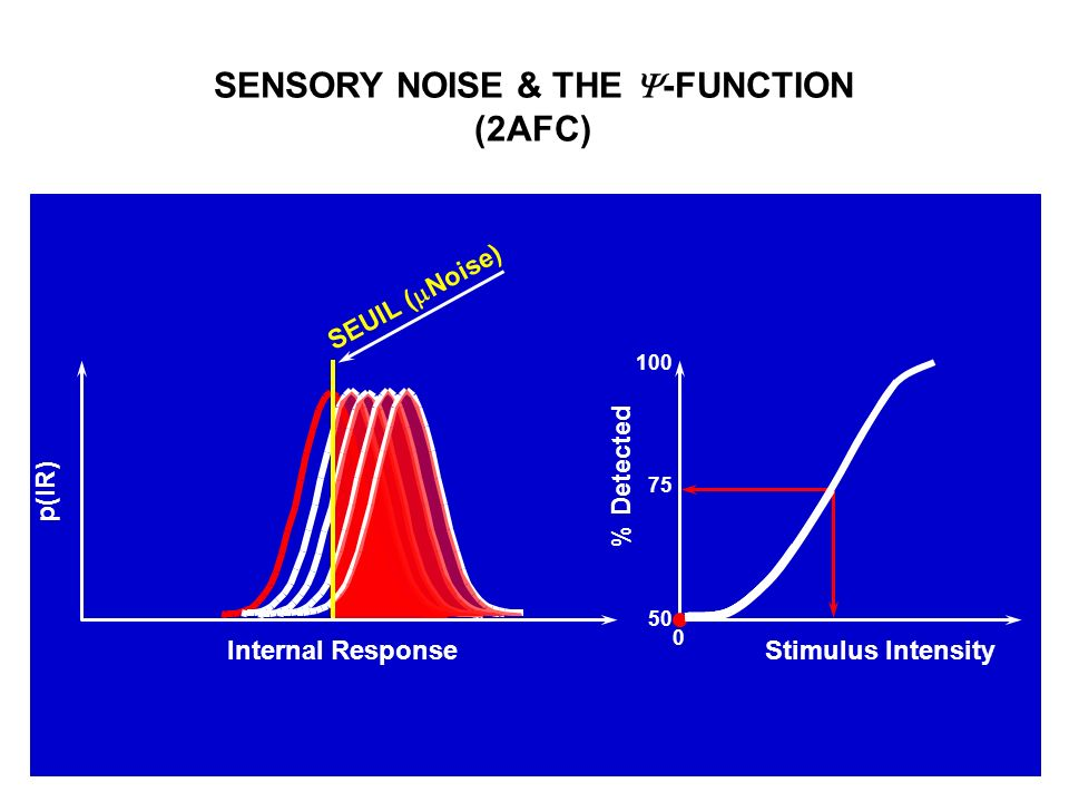 SENSORY NOISE & THE -FUNCTION