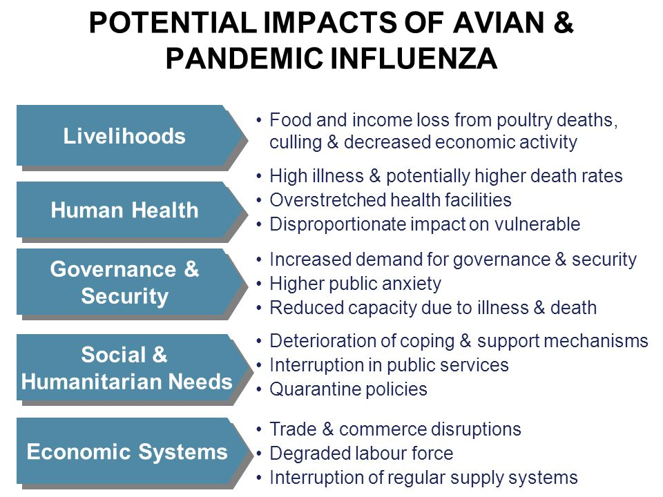 POTENTIAL IMPACTS OF AVIAN & PANDEMIC INFLUENZA