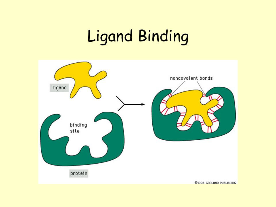 specificity of protein ligan binding Problem 1 (27 points total) a (5 points) a protein has binding affinity for its ligand (a peptide) of ka = 2 10 5 m-1 at ph 50 and 25oc.